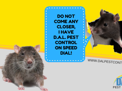 CALL DAL PEST CONTROL