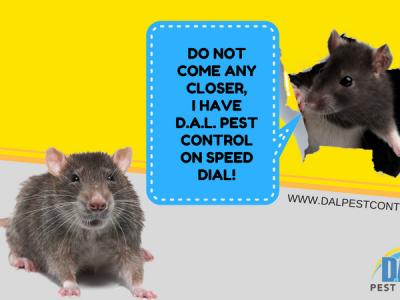 CALL DAL PEST CONTROL