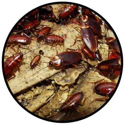 DAL PEST CONTROL ELIMINATES CRAWLING INSECTS